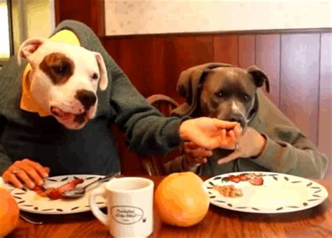 The Dog With Perfect Table Manners