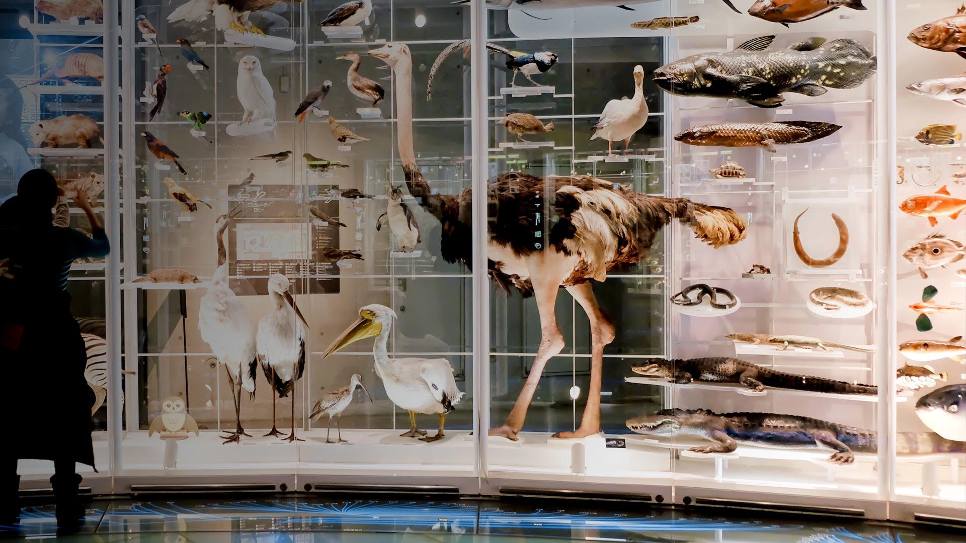 「国立科学博物館」東京, 台東区 (© WindAwake/Shutterstock)