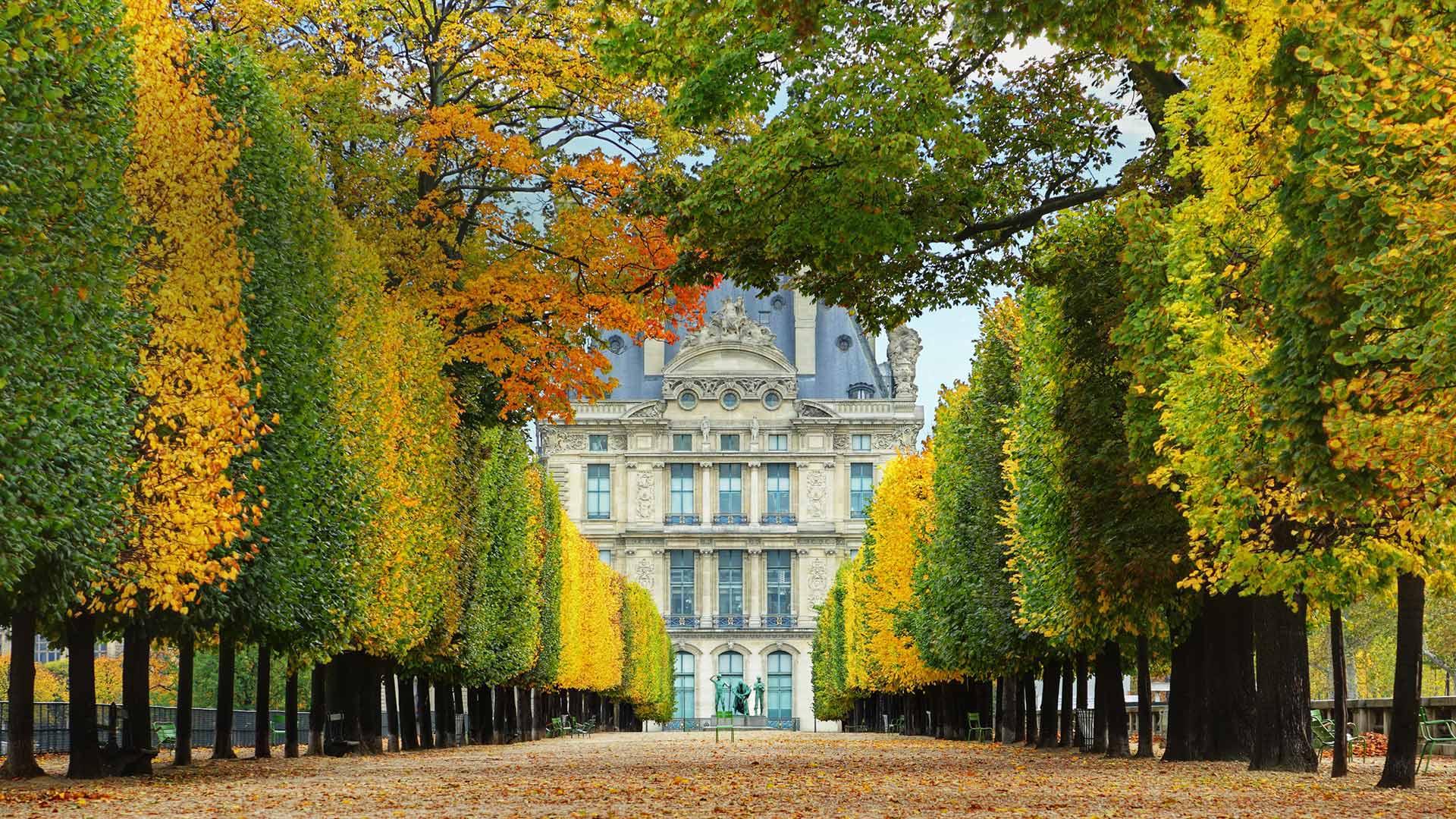 「テュイルリー庭園の並木道」フランス, パリ (© Brian A. Jackson/Getty Images Plus)