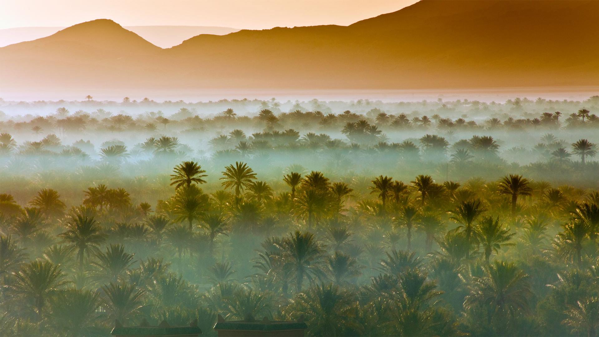 「ナツメヤシの森」モロッコ, ザゴラ (© Frans Lemmens/Getty Images)