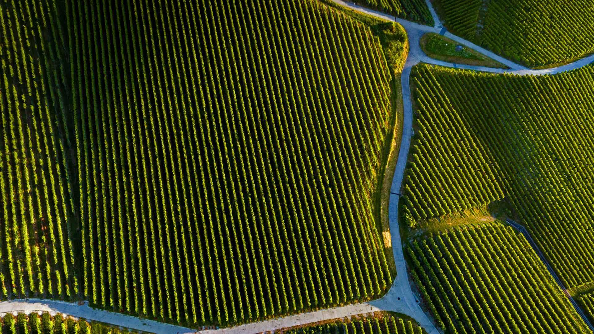 「ピュリーのワインヤード」スイス、ヴォー州 (© Gallery Stock)
