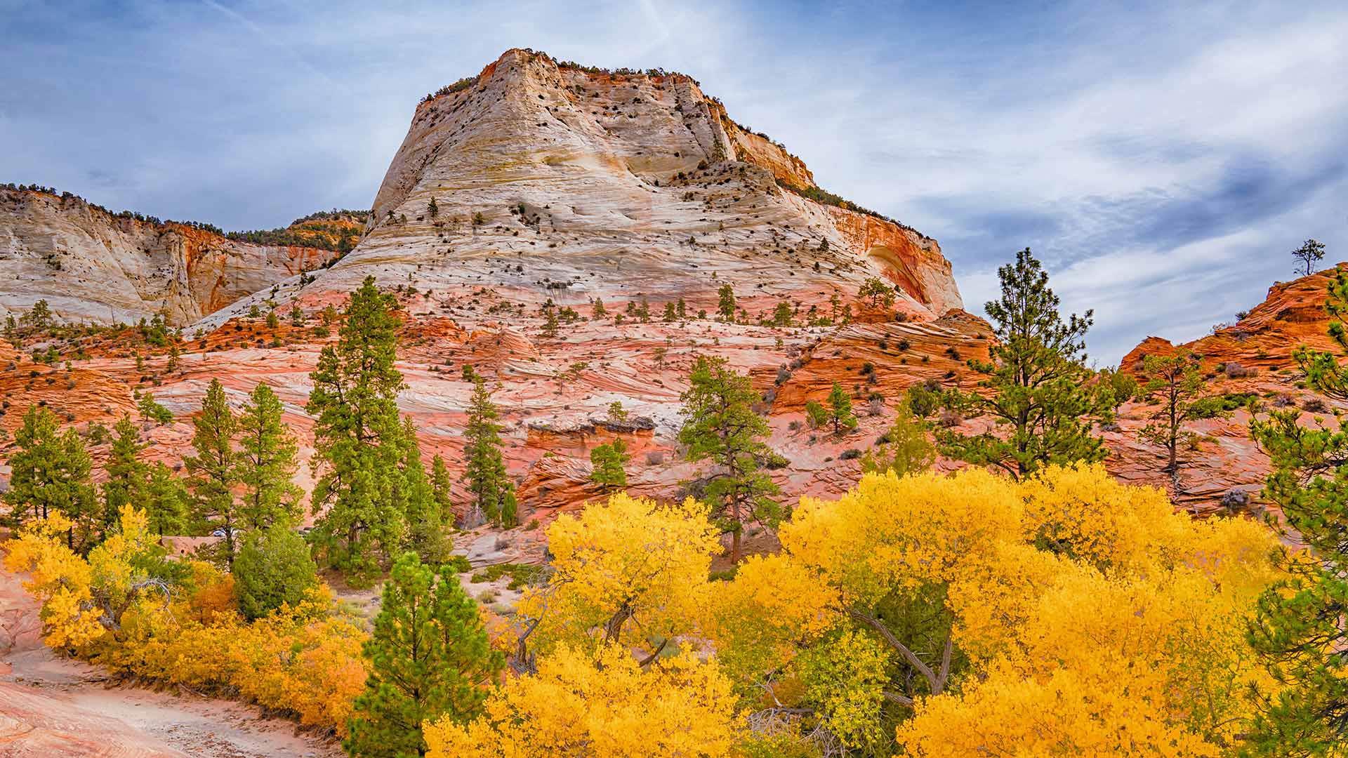 「ザイオン国立公園の紅葉」米国ユタ州 (© pabradyphoto/Getty Images)