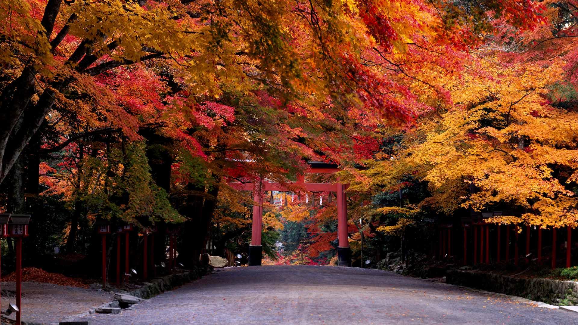 「日吉大社」滋賀, 大津市 (©  JTB Photo/age fotostock)