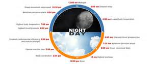 circadian sleep rhythm picture 11