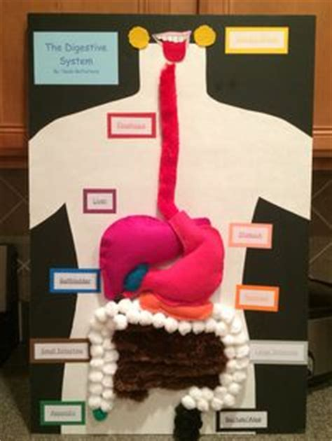 digestion system of hag picture 13
