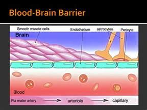 bacteria overgrowth el movement symptoms picture 5