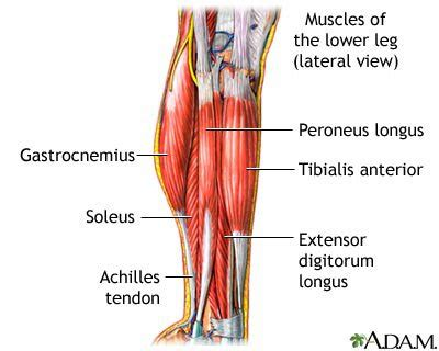lower leg muscle pain picture 1