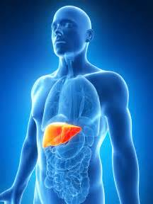 livachol - liver detox supplement picture 10