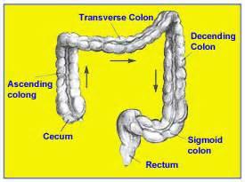 green bowel movement purple gatorade picture 3