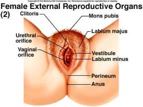 internal view of vagina picture 17