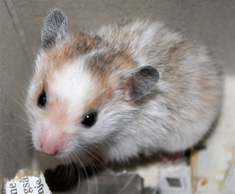 hamster videos picture 13