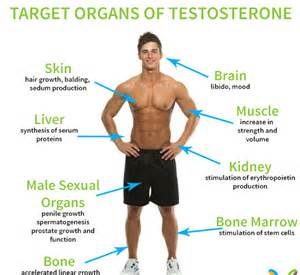 testosterone vs other steroids picture 3