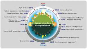 testosterone cycle blood pressure picture 5