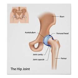 anatomy of hip joint picture 13