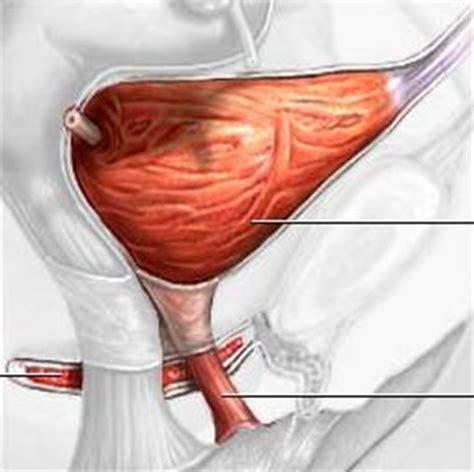 bladder suspension surgery picture 11