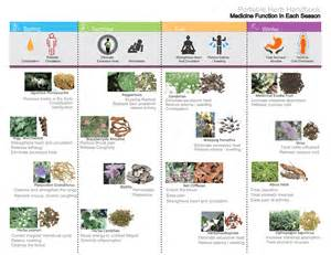 list of herbal medicine cost picture 7