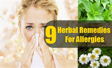 herbal remedies for allergies picture 6