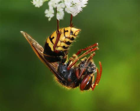 cicada diet picture 6