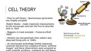 theory on aging of cells picture 11