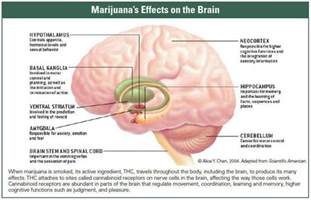 natural ways to flush receptors of the brain picture 2