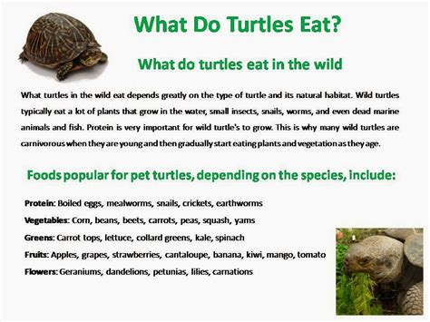 box turtles diet picture 6