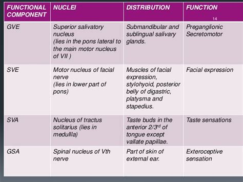 functions of the skin picture 1