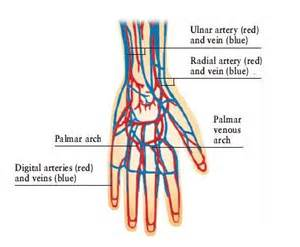 hitting the blood veins in hands what are picture 10