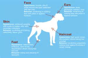 canine loss of hair picture 7