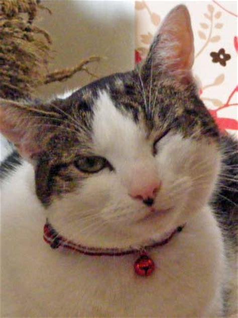 feline herpes conjunctivitis picture 5