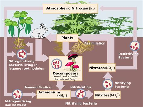 role of water in microbial growth picture 15