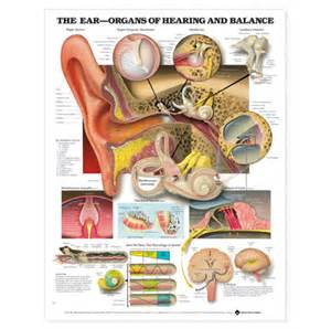 hearing loss and lots of pus in ear picture 5