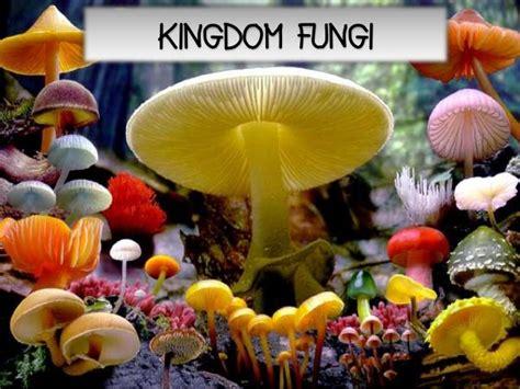 fungi kingdom picture 1