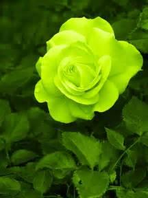green tiy se kya kya hota hai picture 2