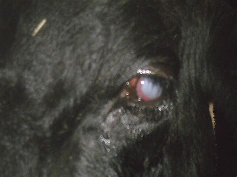 animal herpes picture 1