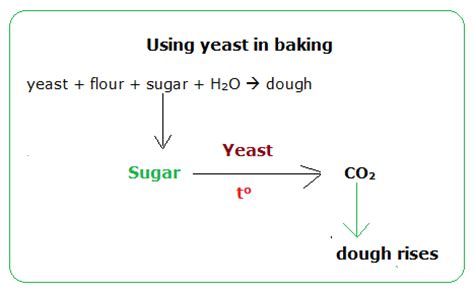 chemical formula for yeast picture 13