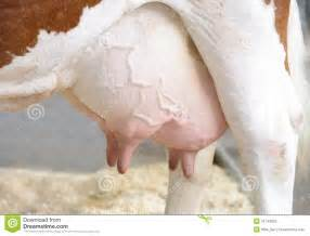 womens udders picture 7