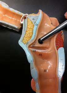 thyroid picture 15