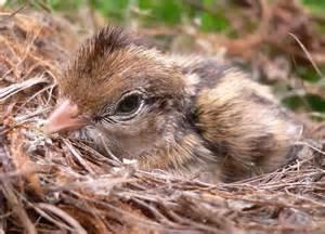 baby bird diet picture 14
