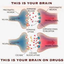 medicine that resets brain receptors picture 14