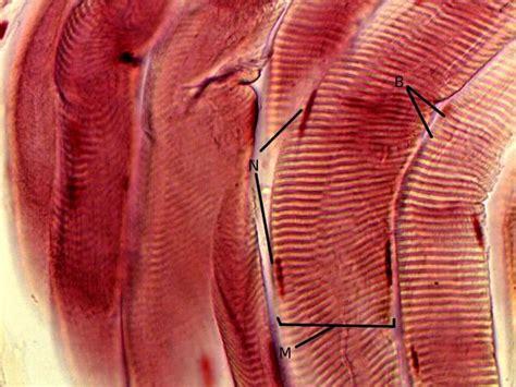 medical bio fiber picture 9