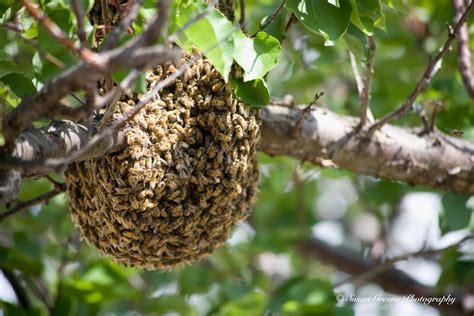 pictures of bee hives and bees picture 6
