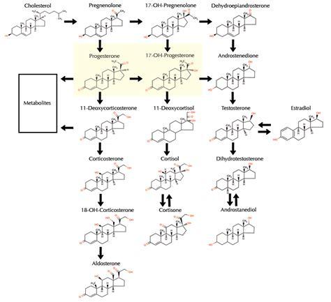 compare testosterone and estrogen picture 10