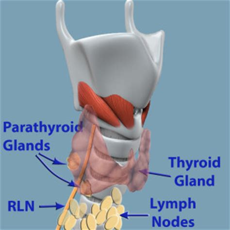 camera procedure for thyroid cancer picture 14