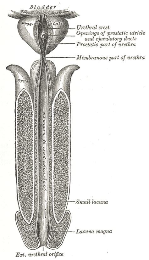 female penile doctors in covington la for men picture 8