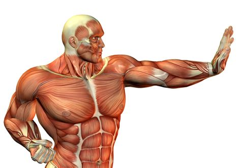 creatine fills out muscle look bigger picture 7