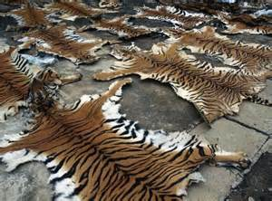 animals killed for skin picture 17