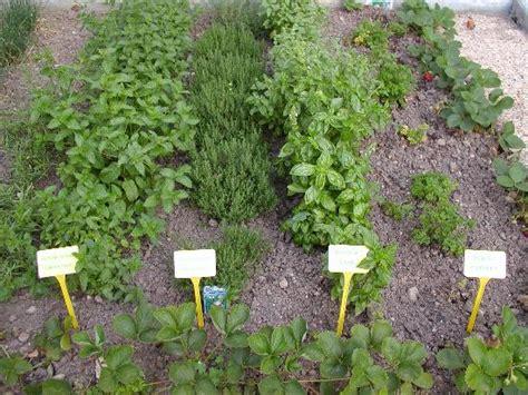 herbal garden picture 14