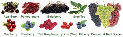acai berry for arthritis picture 7