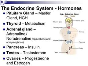 pituitary gland testosterone treatment picture 3