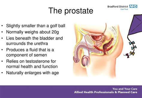 natural for hard prostate picture 3